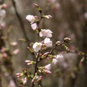 第66回 広島花の祭典(広島)