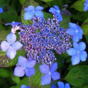 今朝の花 104(広島)