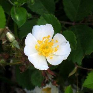 今朝の花 298・・・(広島)