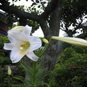 今朝の花 339・・・(広島)