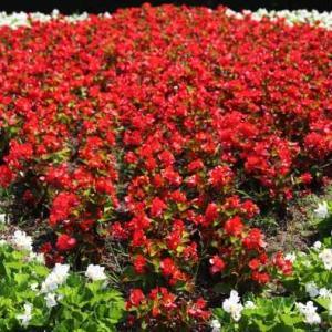 広島市植物公園・大花壇・・・4