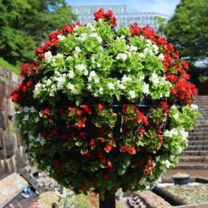 広島市植物公園・立体花壇 2021~2・・・