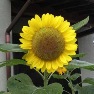 今朝の花 377・・・(広島)