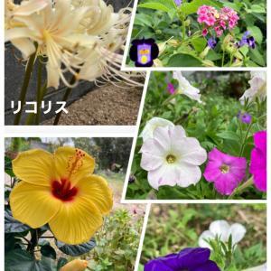 お花に癒されます