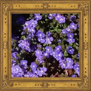 ブルーの小花