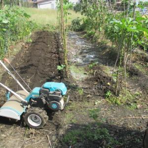 白菜苗の定植準備 家庭菜園を耕す