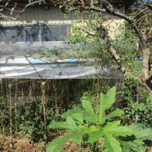 台風対策|小屋の波トタン補修