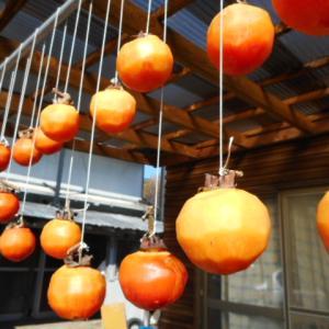 手作り干し柿|初冬の大地の恵み