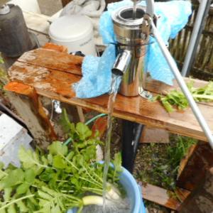 青首大根最終間引きの漬け物|家庭菜園