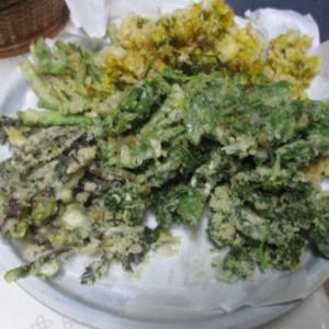タラの芽と野ビルと菜の花のてんぷら|野原の旬の食材