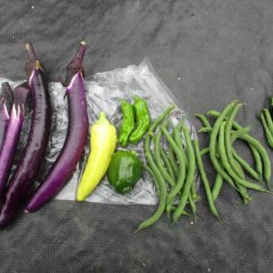 ナスほか夏野菜の初収穫2020