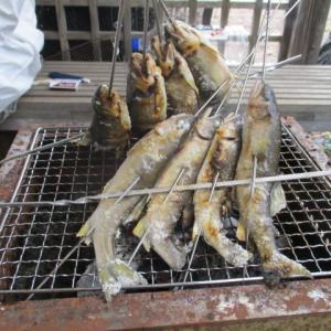 鮎の自宅炭火焼き|ヤリイカと椎茸のバーベキュー