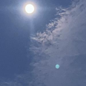 中秋の名月の意味〜眩しい月を見て、そして夜の庭の植物たち