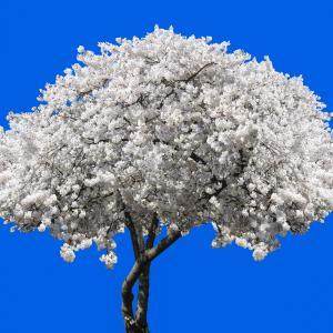婚活の一発逆転、「ドラゴン桜」を咲かせたい!
