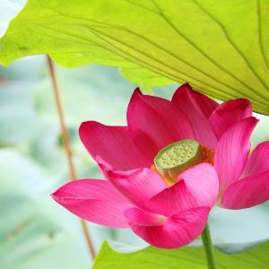 自分の心の「正体」に向き合って、人生をしっかり考える機会にしよう!