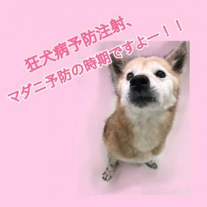 狂犬病&マダニ予防