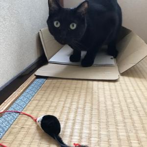 箱に隠れる…?