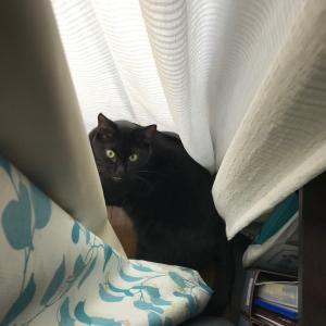 猫にラベンダーは危険!