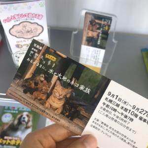 岩合光昭さん写真展の招待券