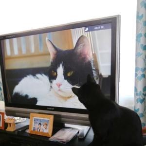 旅猫を見つめる…