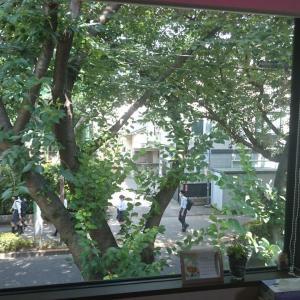 事務所の窓から~梅雨の晴れ間