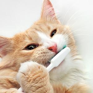 日本人の80%は歯周病らしい/ダーリンの歯磨き