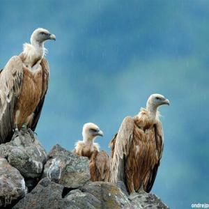 【死別 】チベット仏教の鳥葬が想像と違っていた...