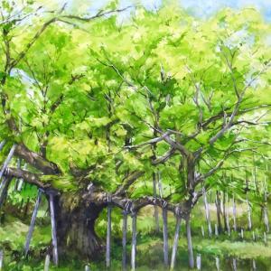 新緑の大樹 (岩泉町・早坂高原・岩手県)