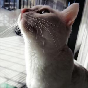 本宅の猫〜104話〜新年のなな蔵✧◝(⁰▿⁰)◜✧
