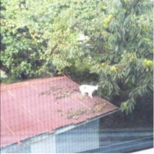 別宅の猫たち~440話~あ!家の裏に見慣れた猫が。