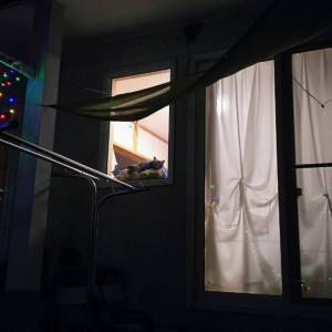 別宅の猫たち〜443話〜窓辺のクロリン