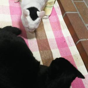 別宅の猫たち〜429話〜12月のブラザーズ