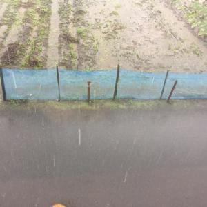 今日も雨ですね・・・