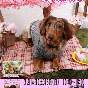 3月14日(土)15日(日)ペットケアガーデンはつかいち お花見(復刻)&イースター撮影会開催!