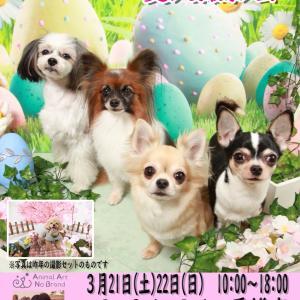 3月21日(土)22日(日)DogSalonDolce香椎店 イースター&お花見(復刻)撮影会