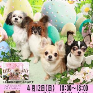 4月12日こばやし動物病院 イースター&お花見(復刻)撮影会開催決定!