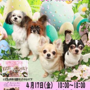 4月17日(金)Parco del Cane  イースター&お花見(復刻)撮影会