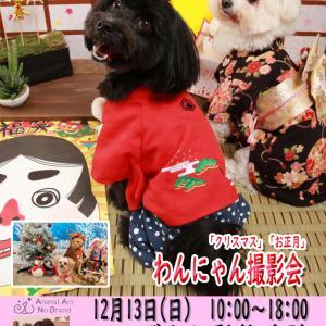 12月13日(日)こばやし動物病院 クリスマス・お正月撮影会開催決定!