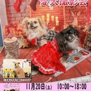 11月20日(土)MoonAroma  クリスマス・お正月撮影会開催決定!