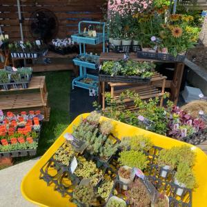 多肉植物とサボテンの癒されるお店