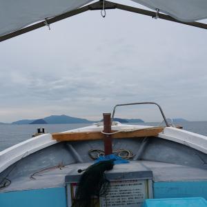 周防大島近辺で船釣り16★ハマチサイズは遠し