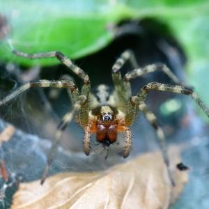 877(2020135) クモと虫の目