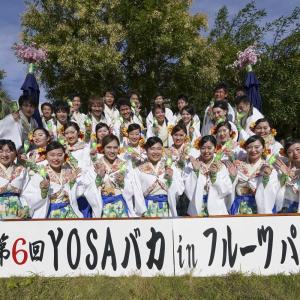 第6回 遠州よさこい YOSAバカINフルーツパーク『葵や一晴』