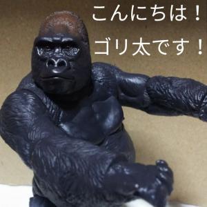 ごり押しゴリ太くん!~No.68~