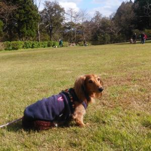 わんこ亭さん主催のお散歩会でした。
