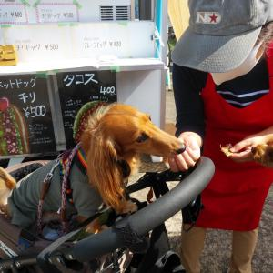 キッチンカーわんこ亭さんの新メニュー