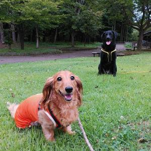 またまた公園でお散歩したよ