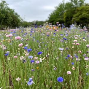 初夏の公園に咲く花たち