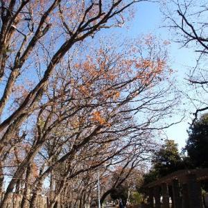 小平散歩☆多摩湖自転車道路