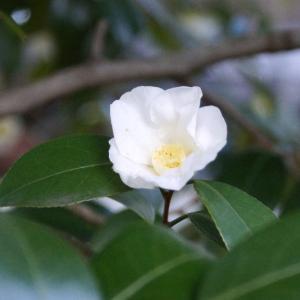 ぼたん苑で咲いていた他の花